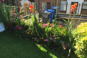 Gardening Competition Results – Special Achievement