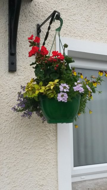 Winner Best Hanging Baskets