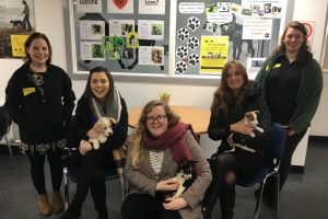 Dogs Trust staff and Apex Tenant Participation team with some very cute puppies.